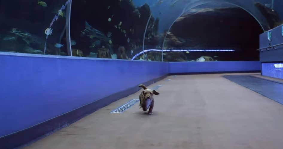 puppy running around the aquarium