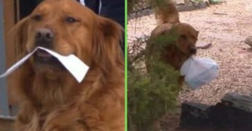 Dog delivers groceries to neighbor during coronavirus pandemic