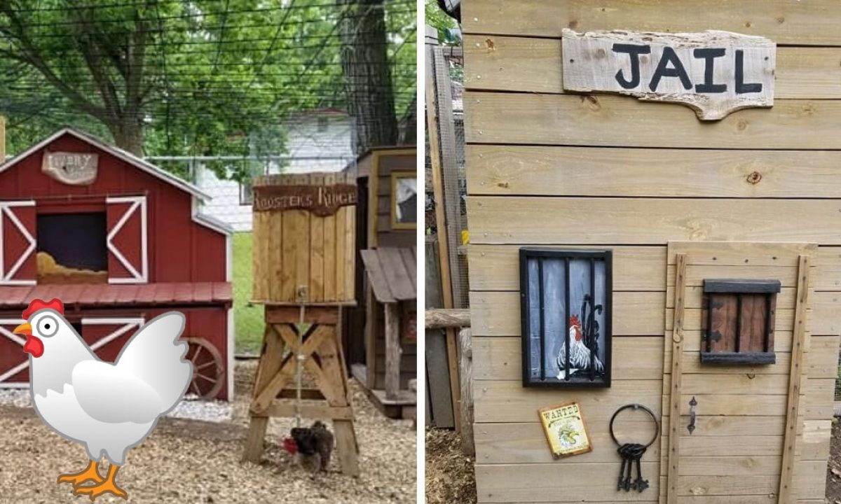 Husband Makes Wife And Her Chickens A Chicken Coop Town