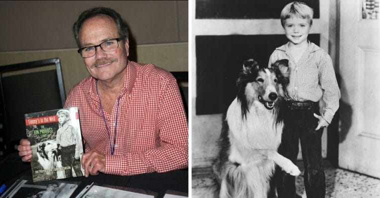 Do You Remember Jon Provost AKA Little Timmy From 'Lassie'_