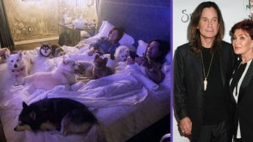 Sharon And Ozzy Osbourne Share Adorable Photo, Cozy In Bed With Eight Dogs