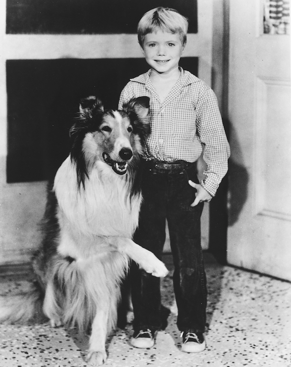 jon provost as little timmy on lassie 70 years old now