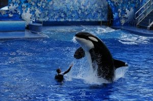 Shamu performances might be going, but SeaWorld has a lot of history, making it a nostalgic location