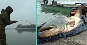 This has been the biggest catfish caught in the area yet