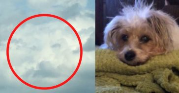 Woman Sees Her Dogs Face In The Clouds Just Hours After She Died