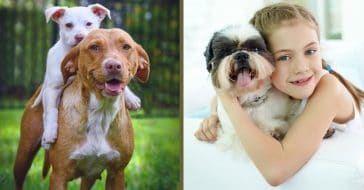 kids who grow up with dogs are better behaved