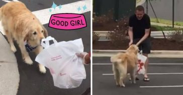 Dog delivers Chick fil A to owner in adorable viral video