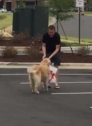 dog delivering chick-fil-a