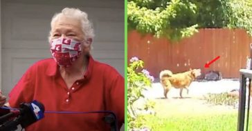 dog leads sanitation worker to elderly owner who fell