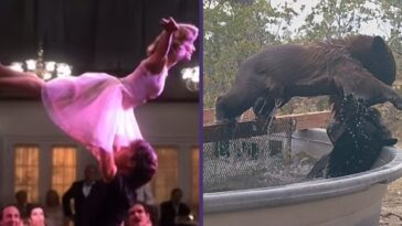 bears do dirty dancing lift