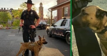 Dog Adopted From Shelter And Returned Twice Becomes K-9 Officer
