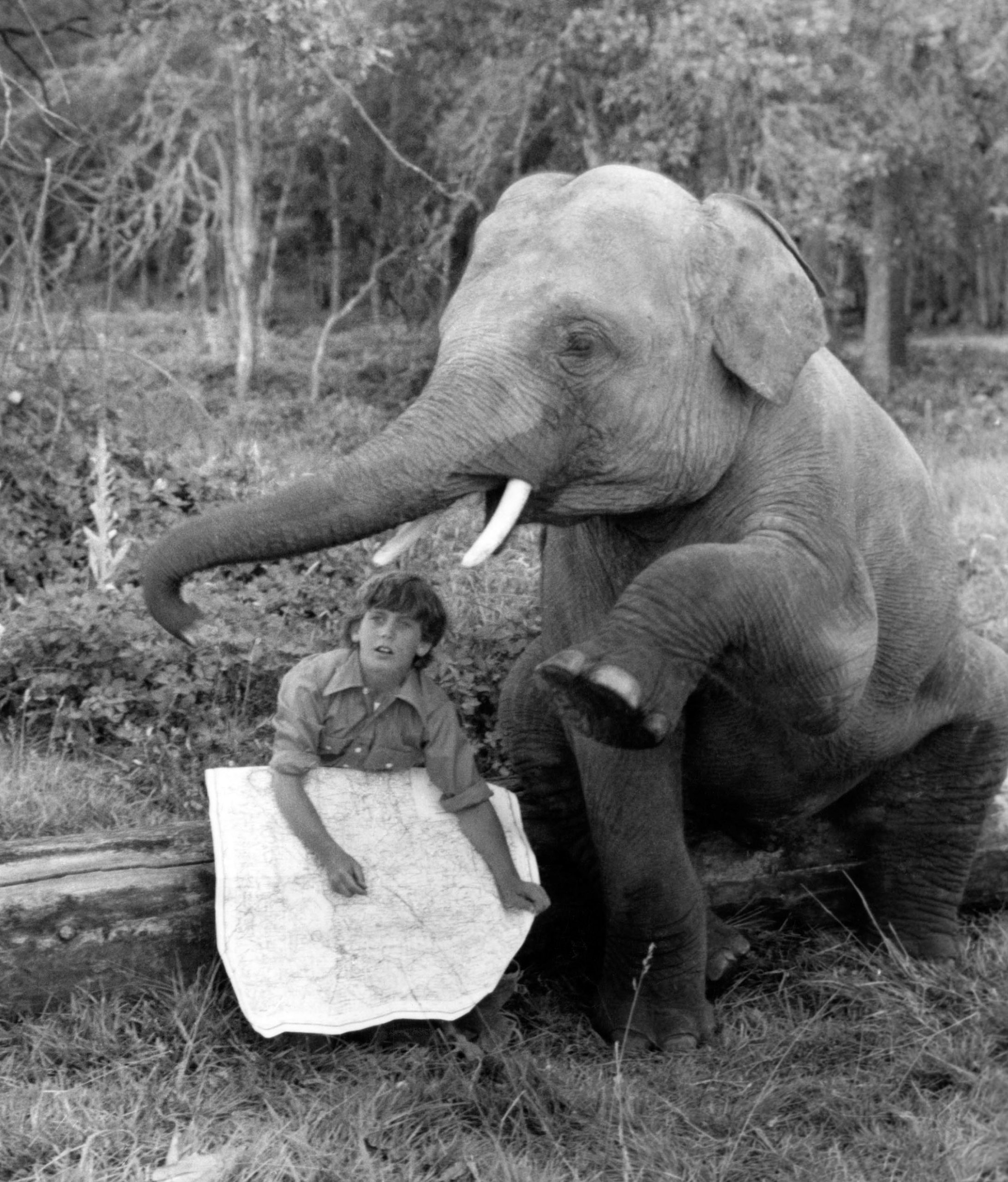 willie-aames-elephant