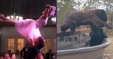 bears do dirty dancing lift