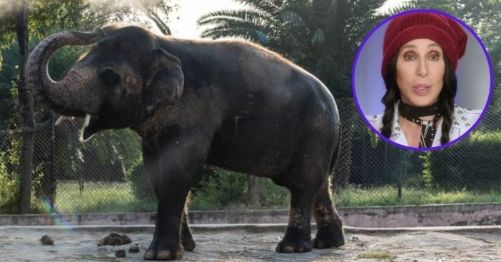 cher travels to pakistan to rescue world's loneliest elephant