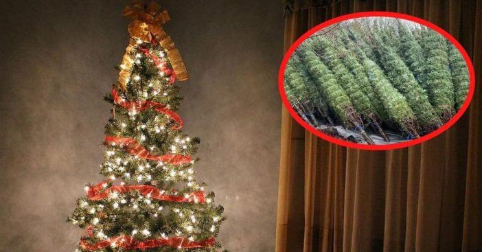 christmas tree shortage 2020