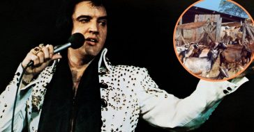 elvis presley farm animals in limo