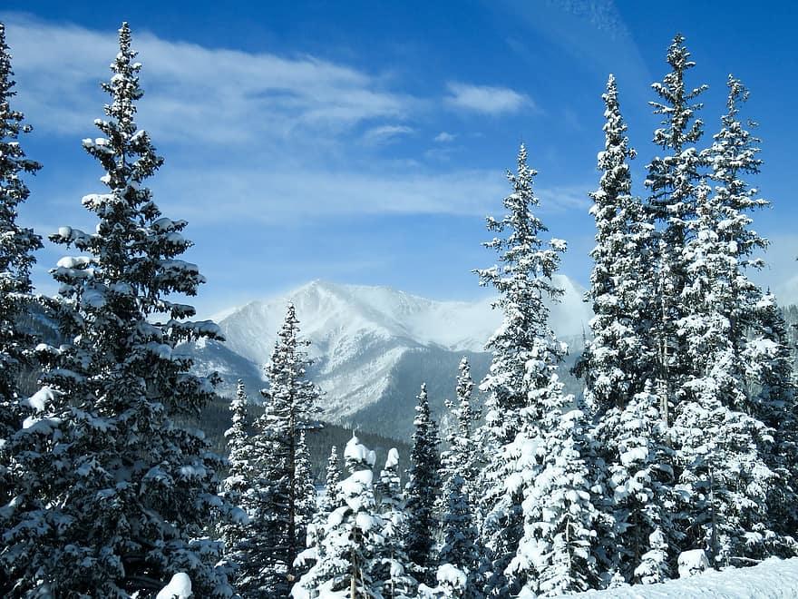 colorado mountains snow snowy trees